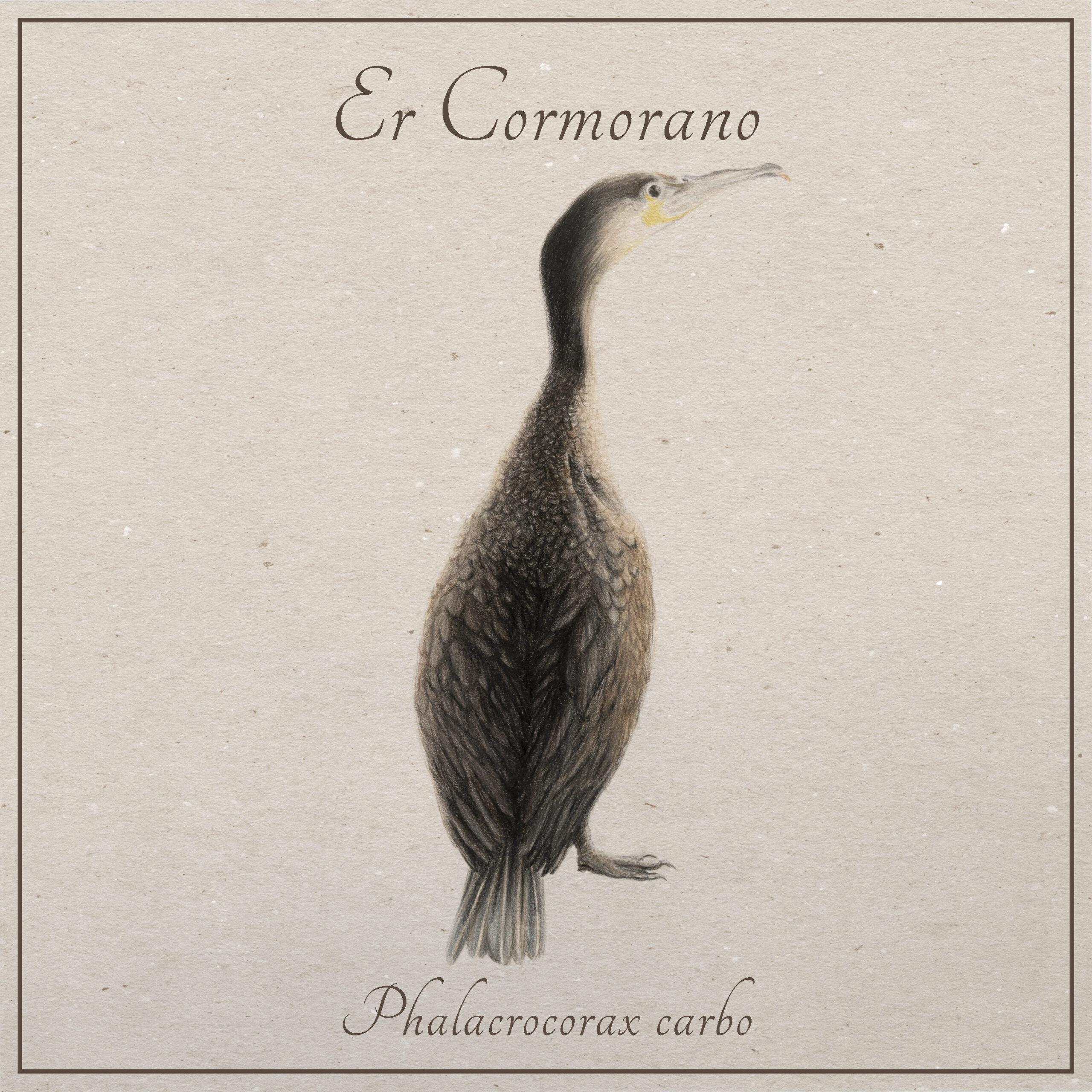 il cormorano | Animali tiberini