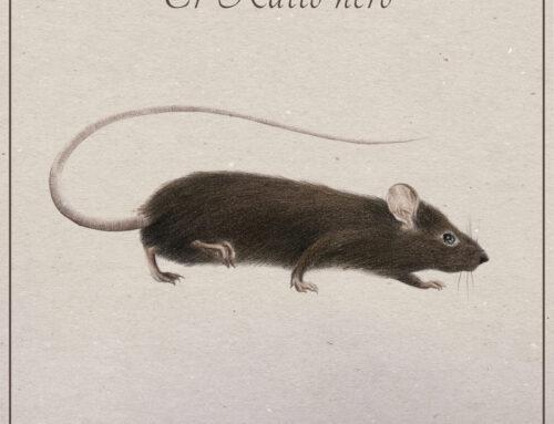 Il ratto nero